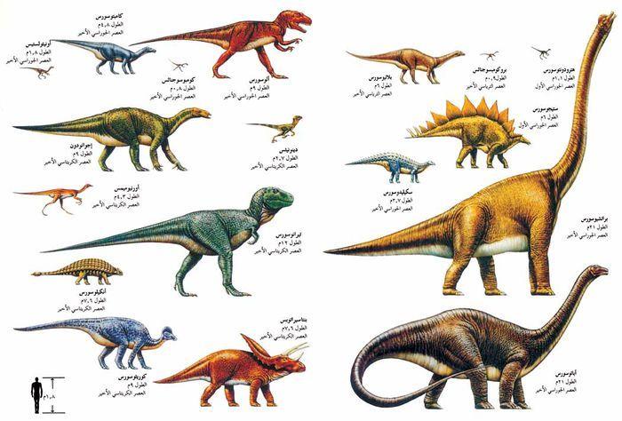 Resultat De Recherche D Images Pour صور لأنواع الديناصورات Animals Moose Art Art