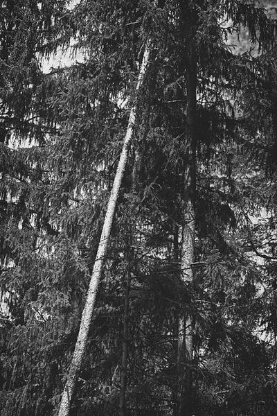 bwstock.photography - photo   free download black and white photos  //  #forest