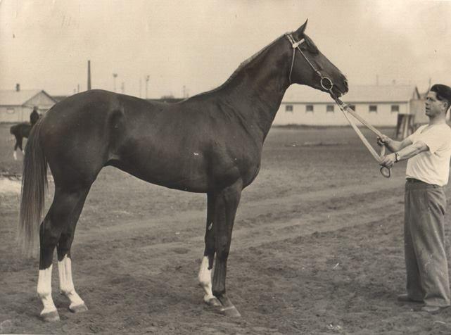 Эксперт (Raufbold - Экспертиза) - победитель Большого Всесоюзного приза (Дерби) 1961 г.