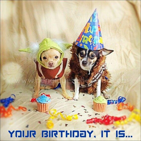 Birthday chihuahua