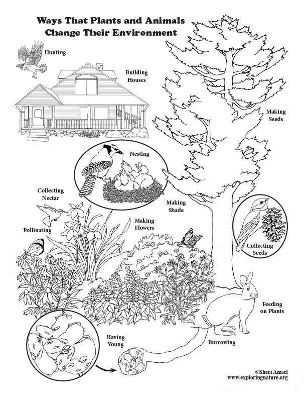Ways That Plants And Animals Change Their Environment Coloring Page Winter Animals Kindergarten Environment Activities Coloring Pages