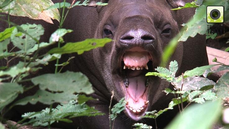 Pin by TravelTelly on TravelTelly - Wildlife   Animals ...