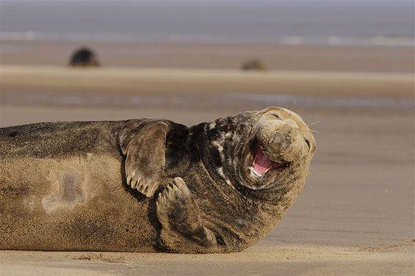 The World's Happiest Animals