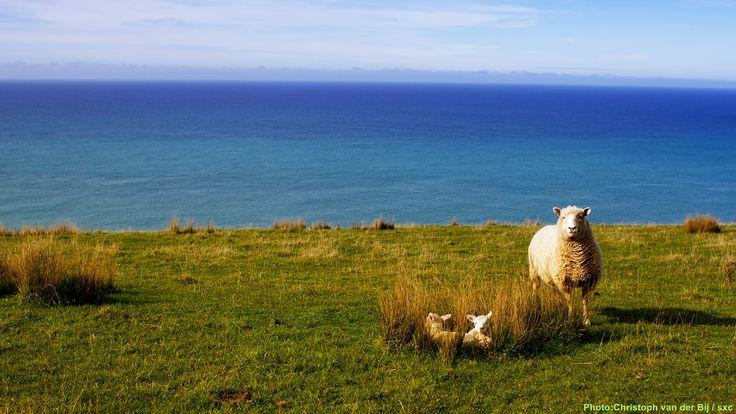 箴言試讀:2014-02-15.顯現期.「務要牧養在你們當中上帝的羣羊,按著上帝的旨意照顧他們,不是出於勉強,而是出於甘心。」彼得前書5:2 #cwwhk #tph #taosheng #信徒箴言 #道聲