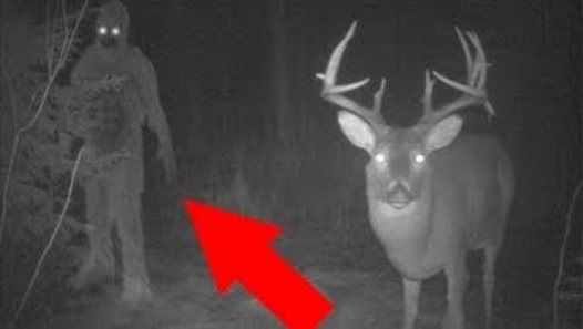 10 CREEPIEST TRAIL CAM PHOTOS TAKEN EVER   These 10 mysterious photos cannot be explained and they just should not exist! These trail cam pictures are really scary - from Bigfoot (Sasquatch) monster to real ghosts and even some unknown creatures these images are terrifying!  10) Is that the Bigfoot monster...?! I think it is! There are so many legends about this scary creature.... this photo was taken by a trail cam in a forest in California and the strangest thing here is that all of the…