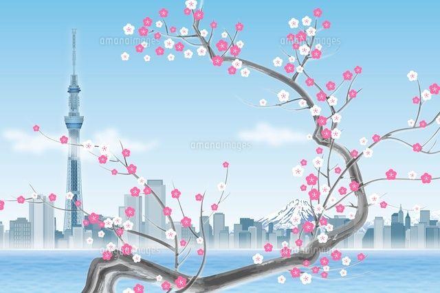 東京スカイツリーと梅の花 イラスト (c)imagewerksRF
