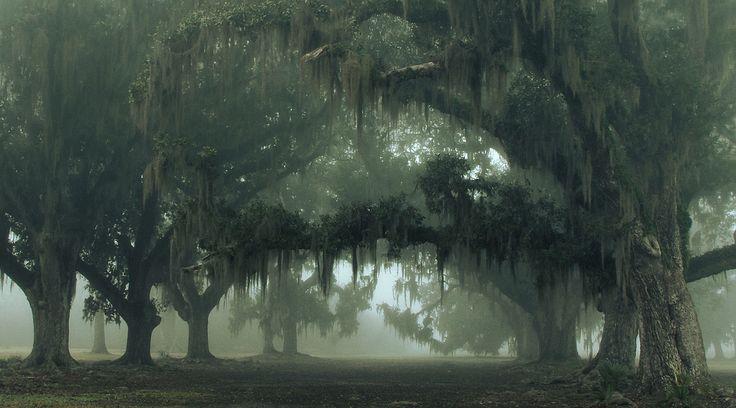 Louisiana - A Little Fog Transforms Already Beautiful Scenes Into Foggy Wonderlands
