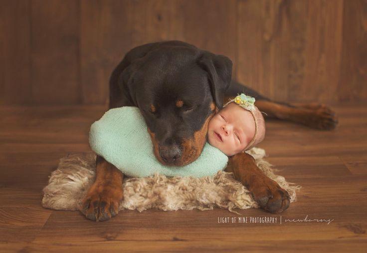 Light of Mine Photography   newborn with dog #Rottweiler #baby #photo