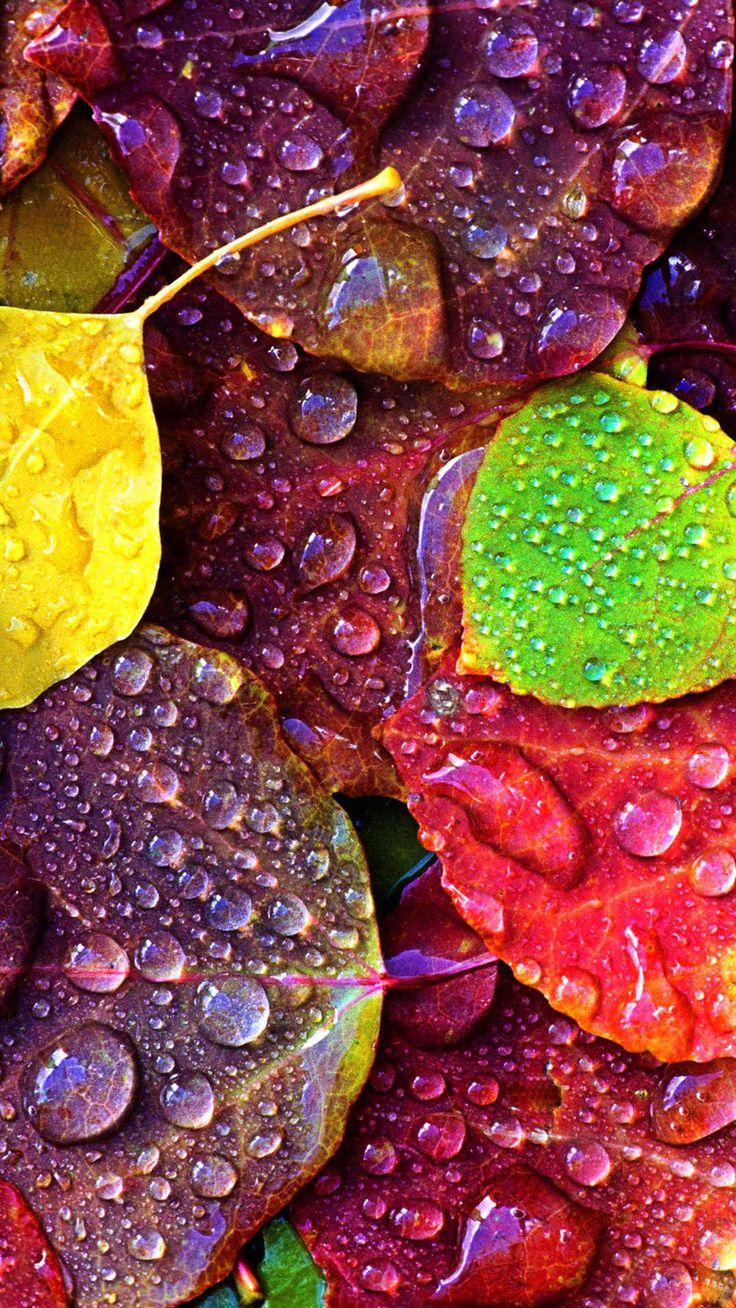 水滴のついた落ち葉 iPhone6 Plus 壁紙