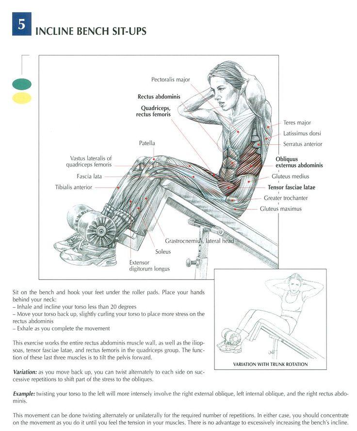 102 Best Anatomy Images On Pinterest Human Anatomy Anatomy