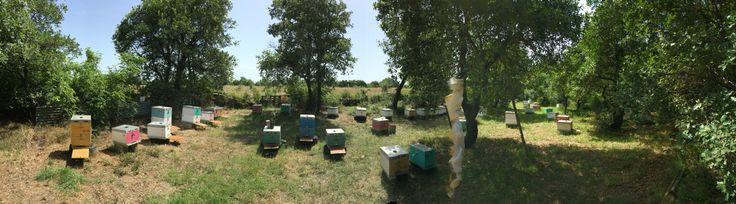 Μελισσοκομείο Ιτέας