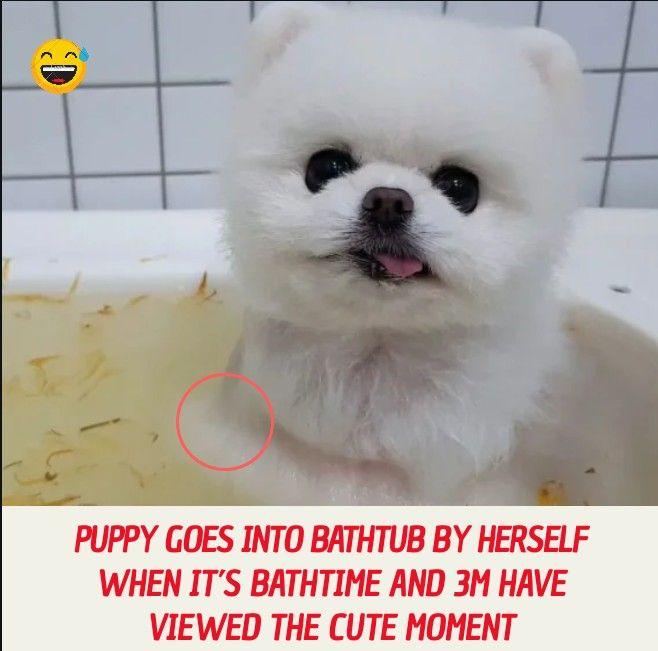 Puppy Goes Into Bathtub By Herself When It S Bathtime And 3m Have