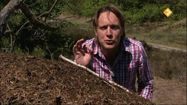 Hoe leven mieren? Bart gaat naar een soort mierenboerderij en legt met nagebouwde mierennesten uit hoe mieren leven. Want hoe slaan ze hun eten op en waar laat de mier z'n afval?