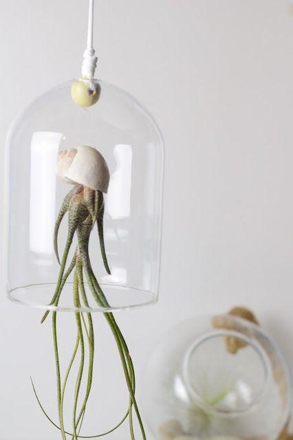 Die besten 17 bilder zu zimmerpflanzen auf pinterest for Dekor von zierpflanzen