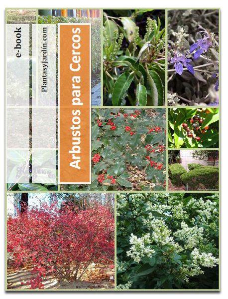 111 best plantas jard n images on pinterest garden for Arbustos para patios