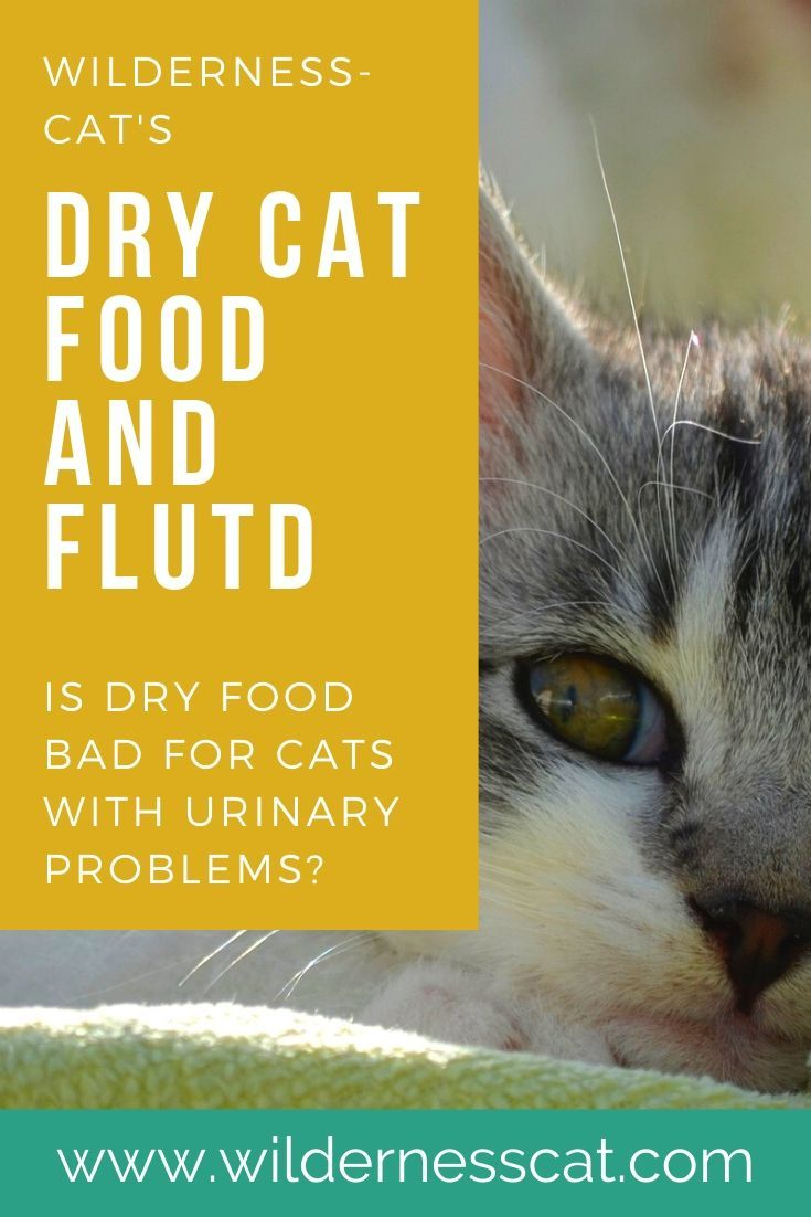 Dry Cat Food And Feline Urinary Disease Is Dry Food Bad For My Cat In 2020 Dry Cat Food Cat Food Cats