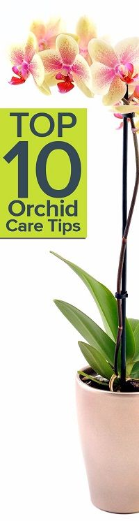 Floral expert Charlee Storner shares her Top 10 Orchid Care Tips @ http://www.ambius.com/blog/top-10-orchid-care-tips/