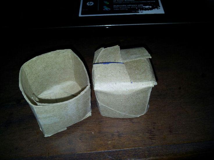 Toilet paper seedling pots.