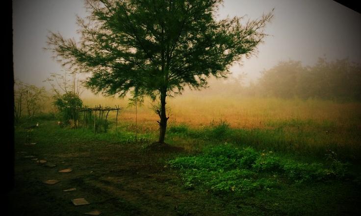 The tree of resonance.