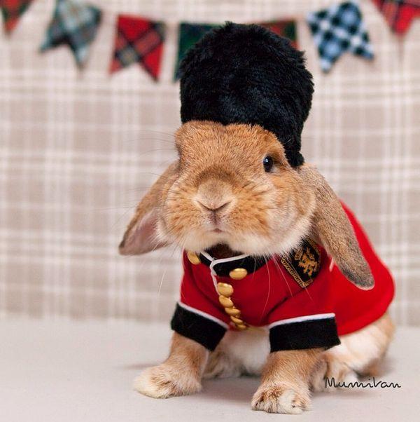 British bun