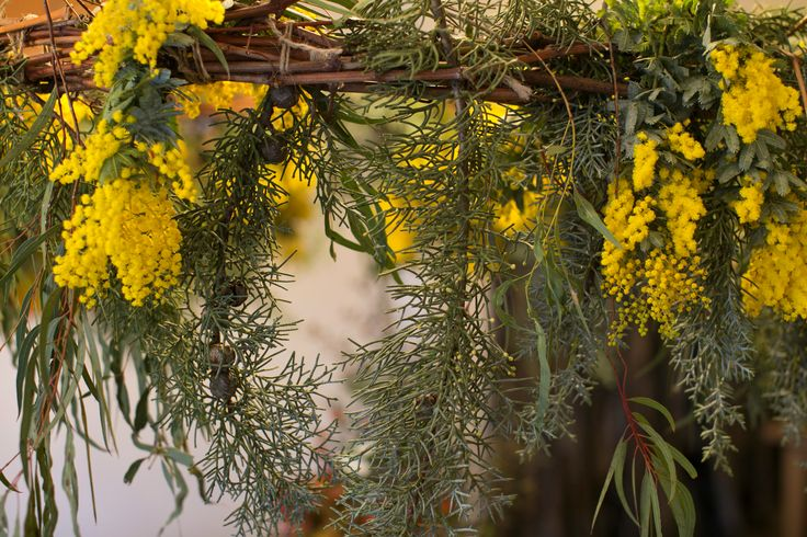 Wreath made for photo shoot featuring yellow wattle, blue cedar and eucalyptus. Photo by Jordan Creatives