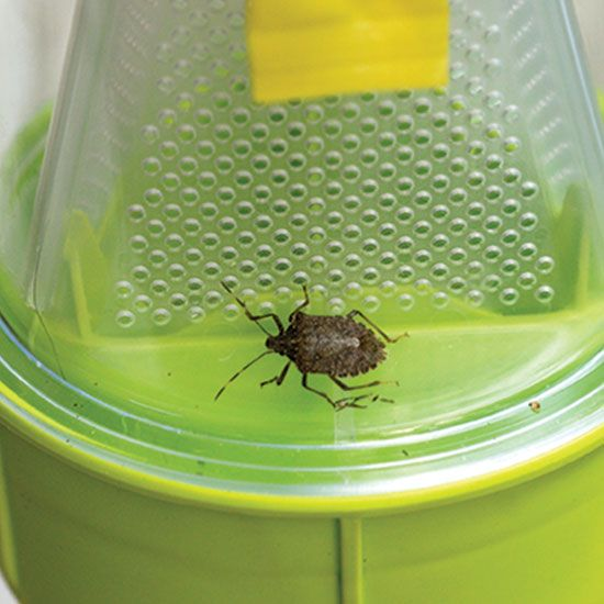 508 best food garden images on pinterest backyard ideas - How to get rid of stink bugs in garden ...