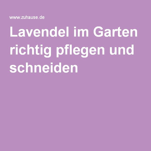 Lavendel im Garten richtig pflegen und schneiden