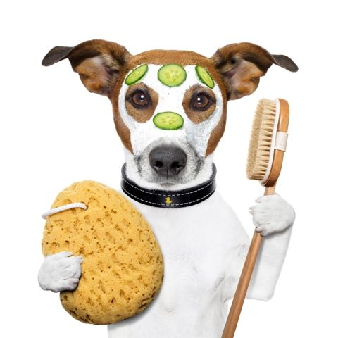 70 best dog and pet wash calgary images on pinterest picture of wellness spa wash sponge dog stock photo images and stock photography solutioingenieria Choice Image
