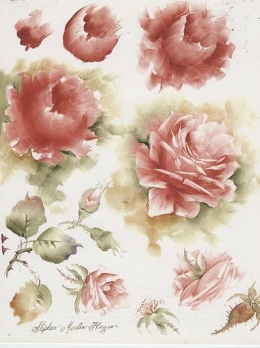 Rose Study Stephen Merlin Hayes