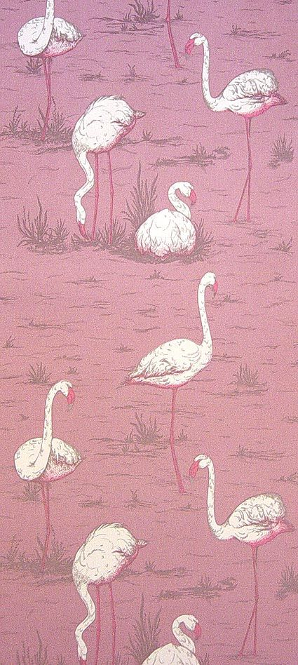 @Maria Accardi Flamingos Wallpaper Pink white flamingoes on a pink background