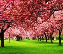 flower trees seen with the greenery and looks at the very beautiful scene