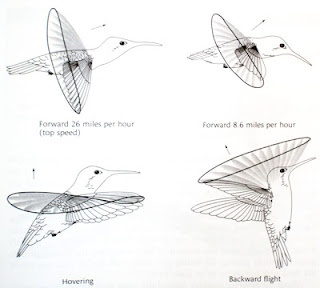 hummingbirds  physics and search on pinterest