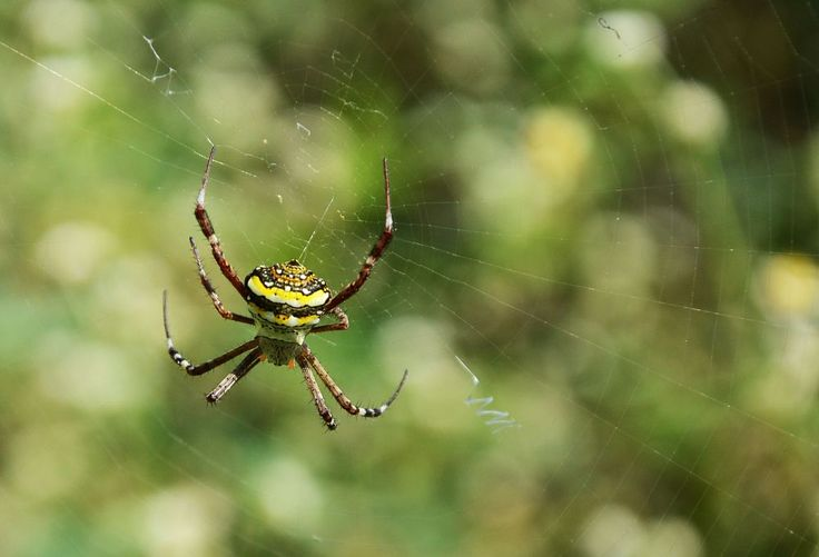 Spider by prabhuviswa
