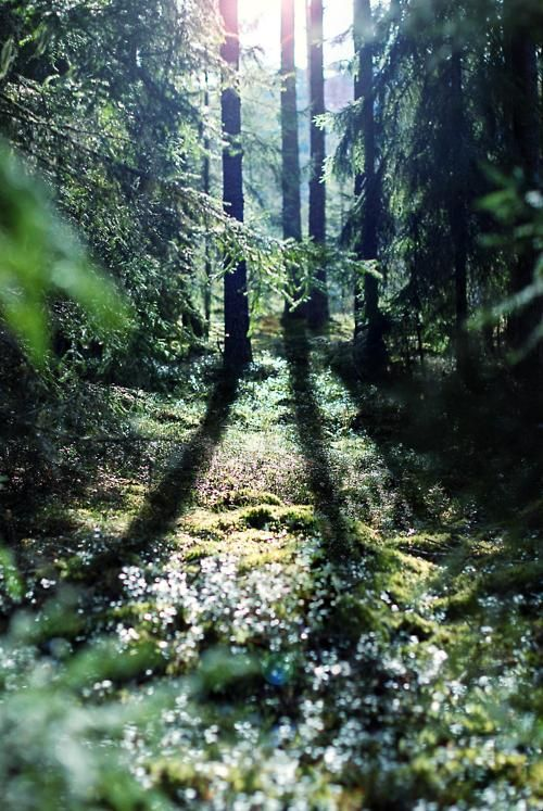 Lights, Forests, Walks, Nature, Beautiful, Trees, Places, Into The Wood, Shadows