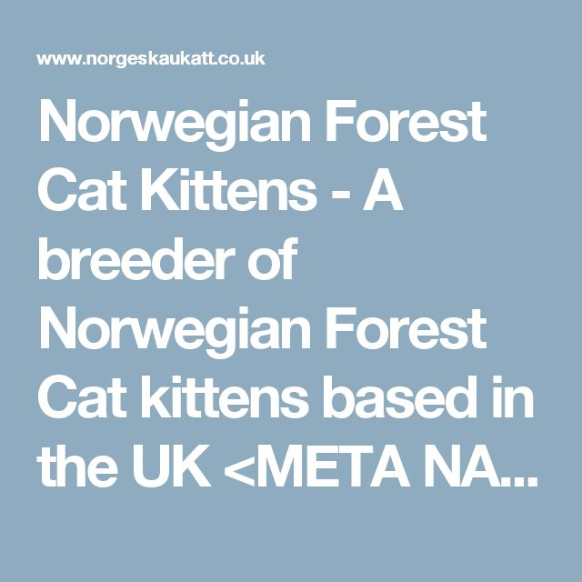 "Norwegian Forest Cat Kittens - A breeder of Norwegian Forest Cat kittens based in the UK <META NAME=""TITLE"" CONTENT=""Norwegian Forest Cats Breeder""> <meta name=""keywords"" content=""Norwegian Forest Cat Kitten Breeder,Norwegian Forest Cat Kitten Breeder,Breeder of Norwegian Forest Kittens,Norwegian Forest Cat Cats for sale,sell Norwegian Forest Cat kittens,Norwegian Forest Cat breeders, Norwegian Forest Cats, breed, Cats,Cat Breed..."