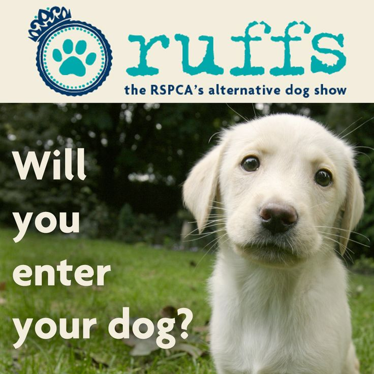 Ruffs is back for 2016 - Enter your dog!  Ruffs is our online dog show that celebrates dogs for their personalities, health and happiness - rather than how they look.  Enter your dog for free if you think they're special and deserve to be recognised: http://blogs.rspca.org.uk/insights/2016/02/08/enter-your-happy-hounds-into-ruffs-2016/