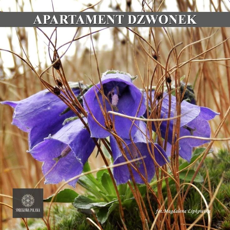 Apartament Góralski - zapraszamy! #poland #malopolska #zakopane #mountain #tatry #place #destination