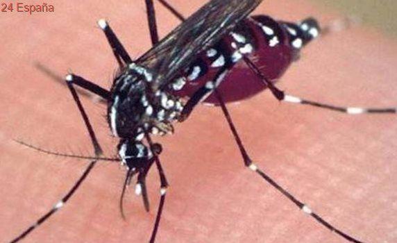 Aragón amplía su batalla contra el mosquito tigre con cientos de «ovitrampas»