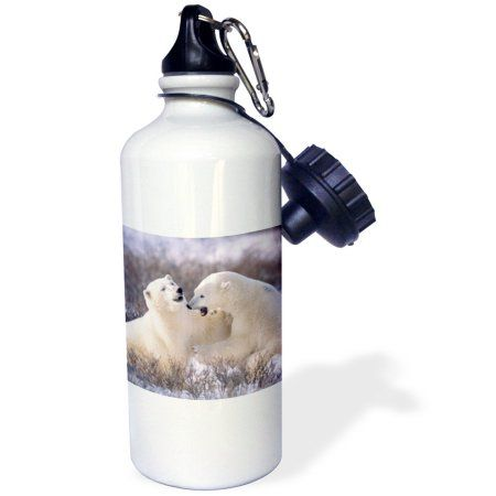 3dRose Polar Bears play fighting.(Ursus maritimus).Churchill, Canada, Sports Water Bottle, 21oz