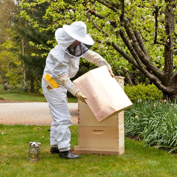 Beekeeping for Beginners—The First 10 Days with Your New Beehive | Organic Gardening Blog