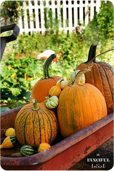 pumpkins and gourds in an old radio flyer red wagon! Love It!