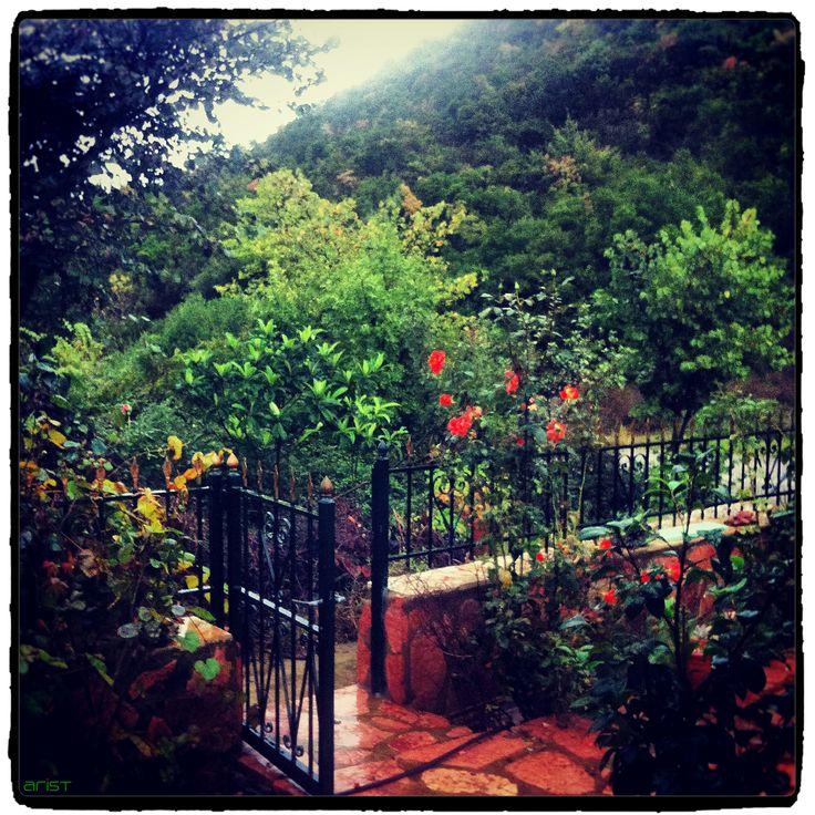 #garden #paradise