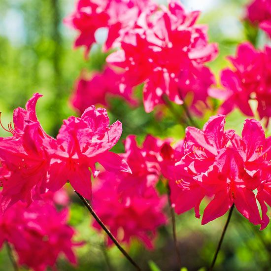 With careful planning, you can have shrubs flowering in your yard almost all year long. Check out this list of plants and shrubs that will give your garden interest from spring through winter.