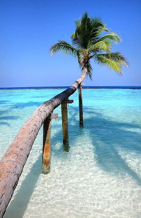 Tropical Palm over Lagoon by Jenny Rainbow. Maldives #aromabotanical