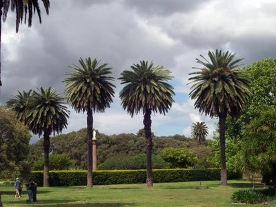 Free things to do in Sydney this weekend - Centennial Park