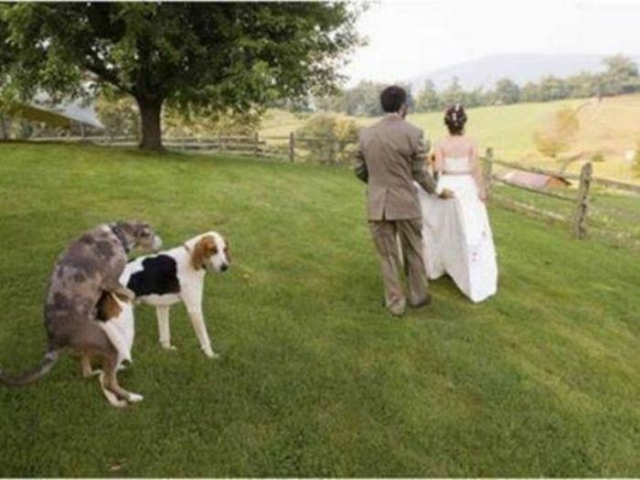 Молодожены стали свидетелями на собачей свадьбе.