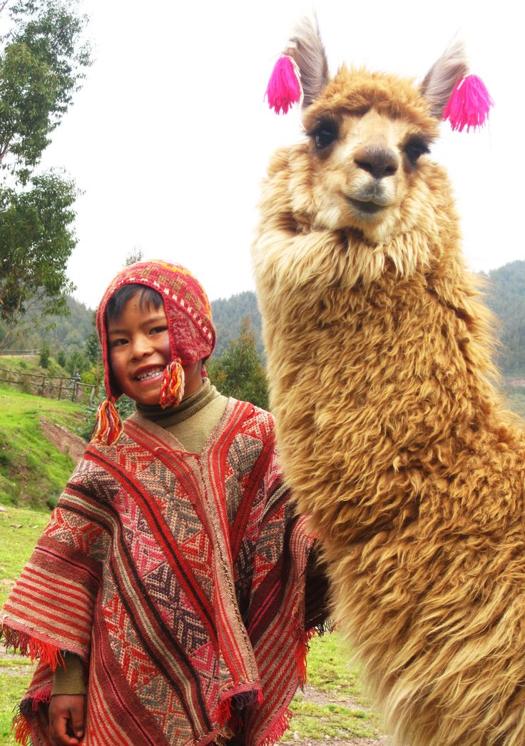 Un chico y el llam en Peru