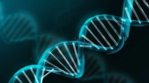 """Imagine being able to activate your dormant, """"junk"""" DNA?  In recent news, scientists and geneticists have discovered three and four strand DNA in human cells while some geneticists believe we may soon evolve to a 12 strand DNA."""