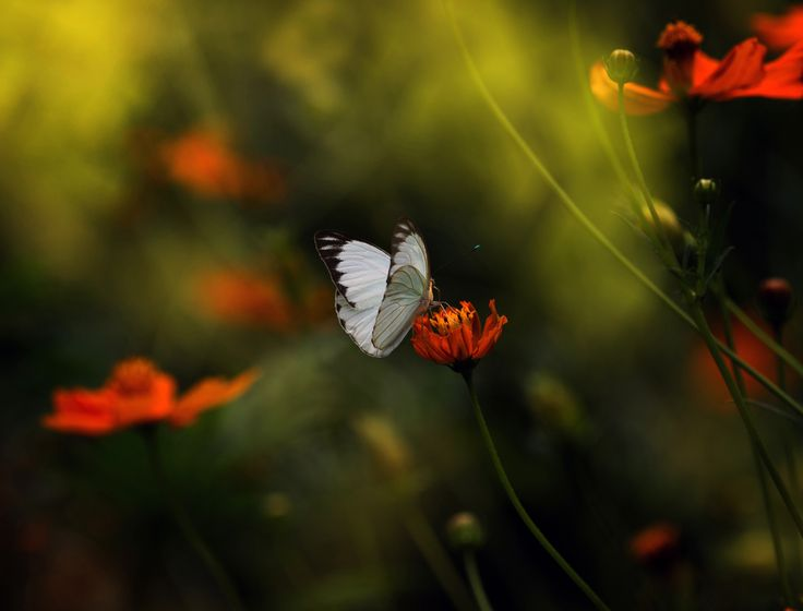 Photograph Sunny by Eleonora Di Primo on 500px