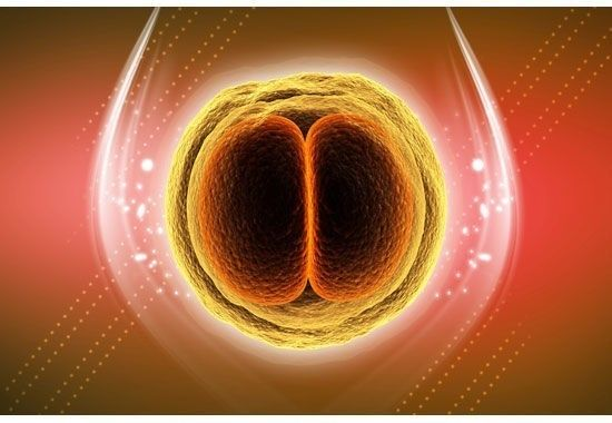 Grossesse extra utérine : La grossesse extra utérine est une mauvaise implantation de l'œuf fécondé ; au lieu de s'implanter dans l'utérus, il va s'implanter en dehors. Dans la majorité des cas la grossesse extra utérine se situe au niveau des trompes de Fallope. #grossesse #régimegrossesse #nutrition #nutritiongrossesse #mynutri #grossesseextrautérine
